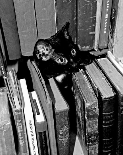07 - Des chats au milieu des livres