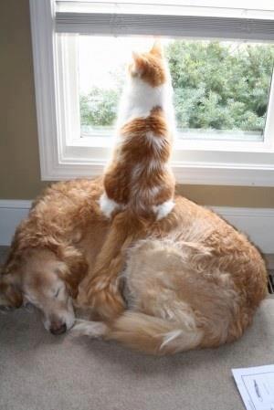 chat-dessus-chien.jpg