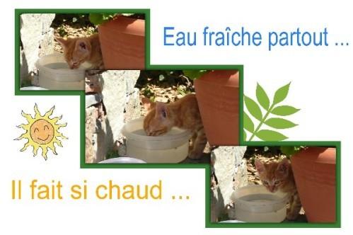 chypre_chat_eau-fraiche.jpg