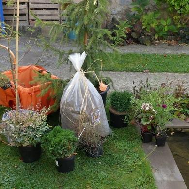 Journée des plantes d'automne 2018 de Chantilly : de sa déraison faire bon usage...