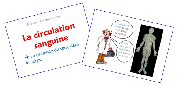 La circulation sanguine (diaporamas)