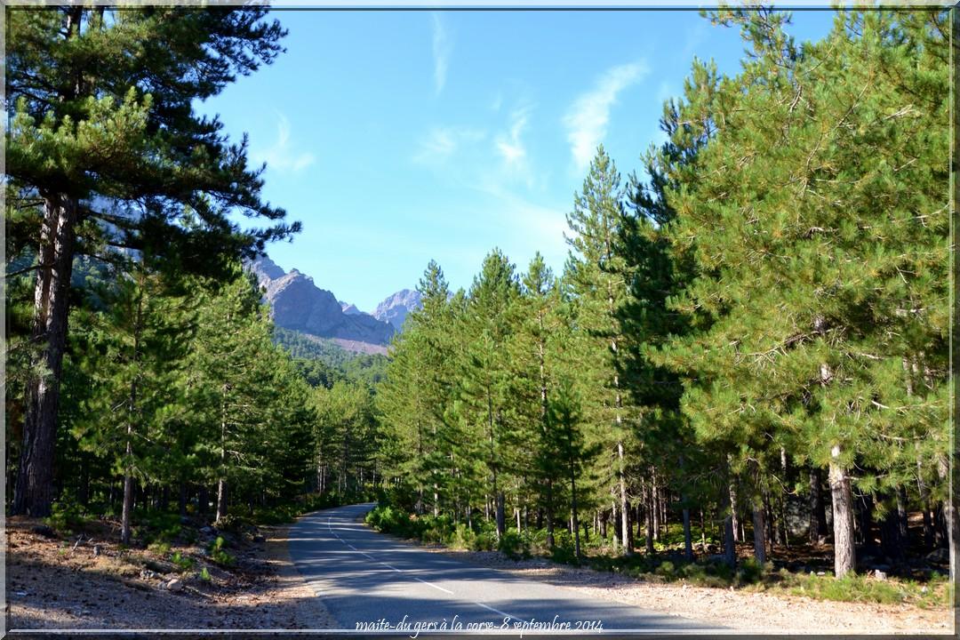 Sur la route d'Asco - Haute-Corse