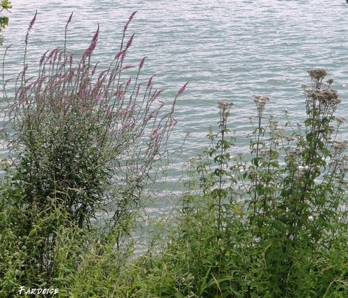 Biodiversité le long de la voie bleue - au coeur de l'été