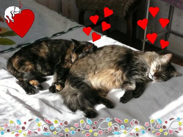 Les chats dans un rayon de soleil