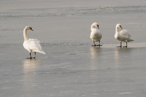 Sur la glace ...