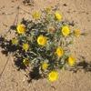 059 Désert fleuri