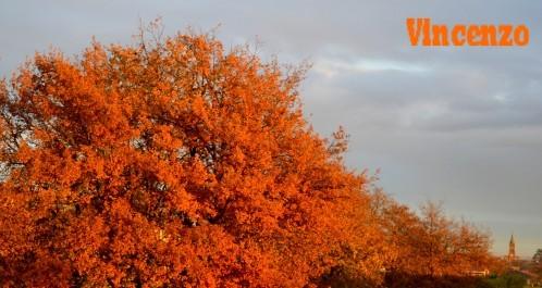 Decembre en orange 3