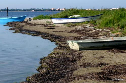 Un pêcheur et des barques