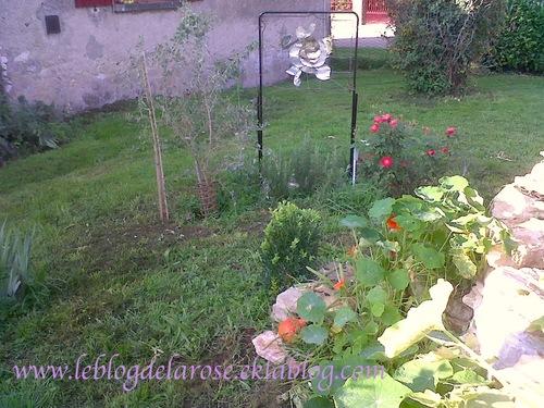 Danse orange au jardin/Orange danse in the garden