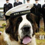 Utrolige hunde historier