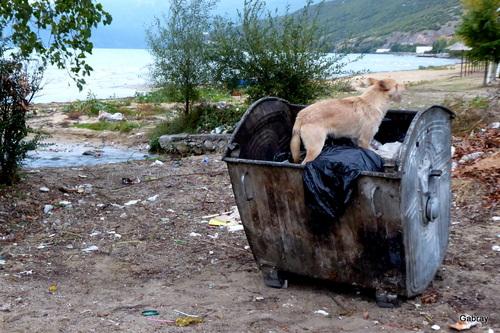 Albanie: les chiens en liberté