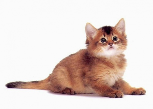 pour les amoureux des chats -4-