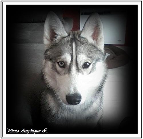 Jeska (7 mois)