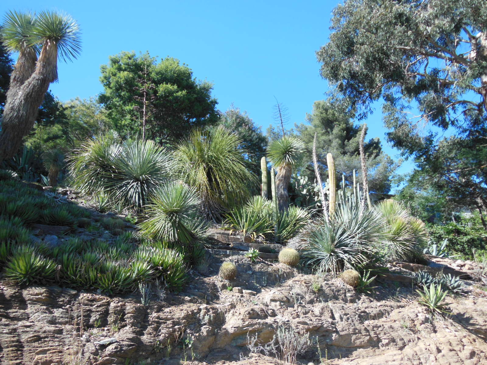 Domaine Du Rayol Le Jardin Des Mediterranees A Rayol Canadel Sur Mer