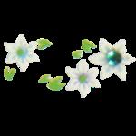 Stickers d'ongles edelweiss en été