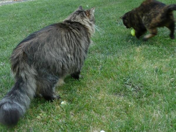 Chasse aux oeufs de Paques et chats