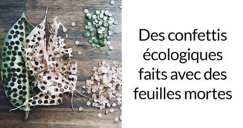 Confettis écologiques