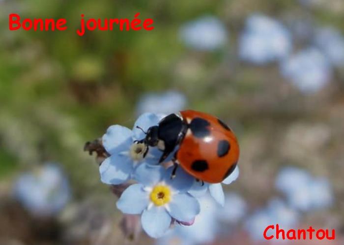 CHANTOUVIVELAVIE : BONJOUR - SAMEDI 31 08 2019