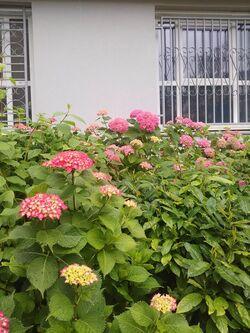 Fleurs de Juin !