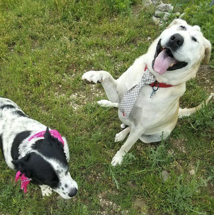 Ce chien abandonné à cause de son visage « laid » a été adopté, et sa transformation est incroyable – ipnoze