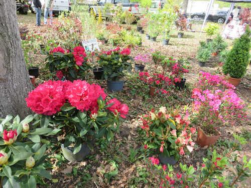 Des fleurs et une balade magnifique !