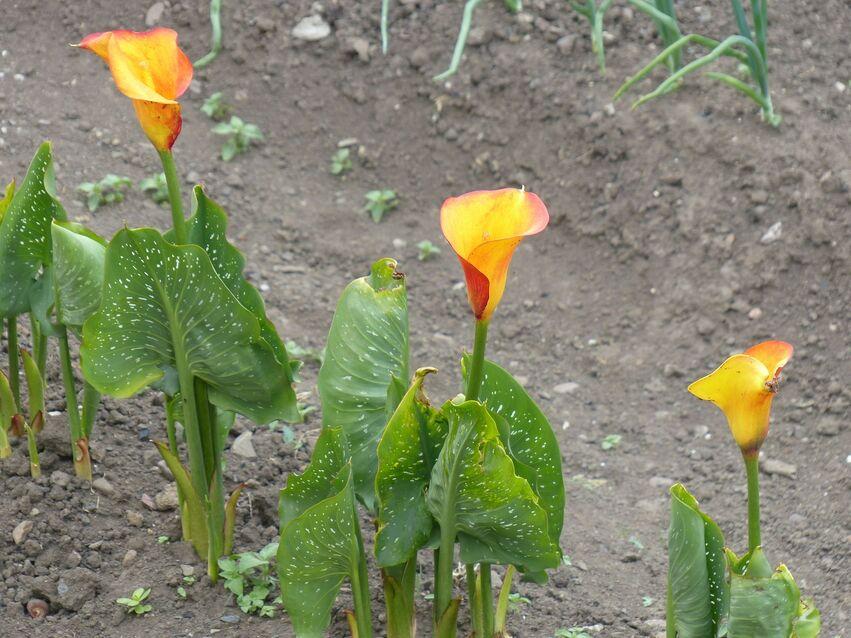 Les fleurs de Maggy