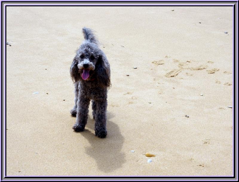 La plage de Boyardville juin 2012