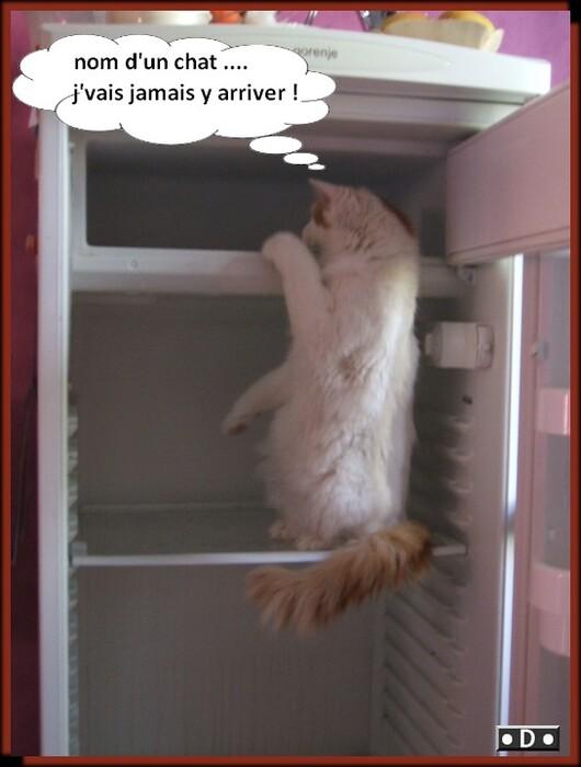 chat fait tout dans cette maison !!!