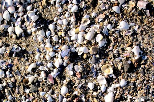 La plage : sable et coquillages !