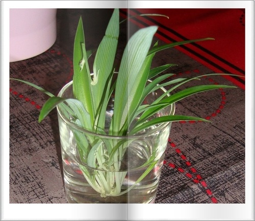 Echange plantes  ♥