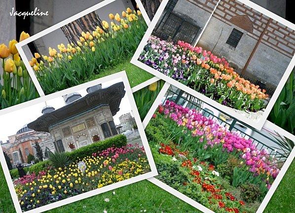 tulipe-copie-1.jpg