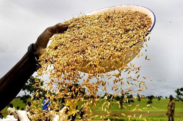 Une nouvelle plateforme en ligne de l'ONU aide à réduire les pertes alimentaires