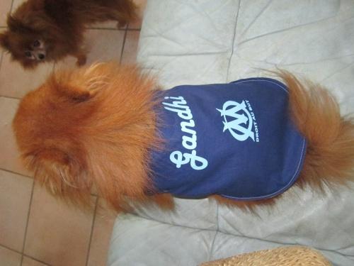 manteau  pour chien supporter de l'OM