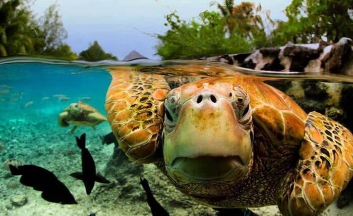 36 photos sous la surface de l'eau à couper le souffle