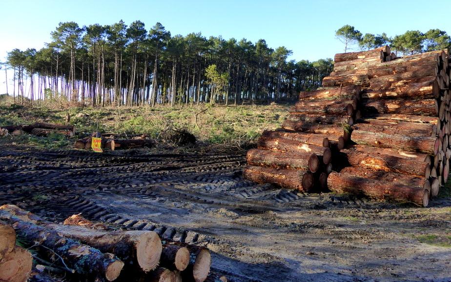 Le bois en face de l'EHPAD abattu