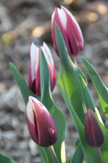 Sous les frimas d'avril
