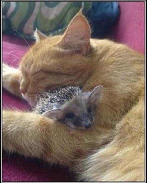 Une belle leçon d'amour maternel