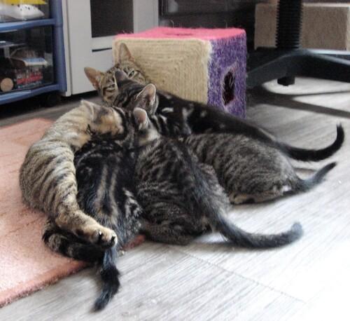NINA et ses chatons-clones