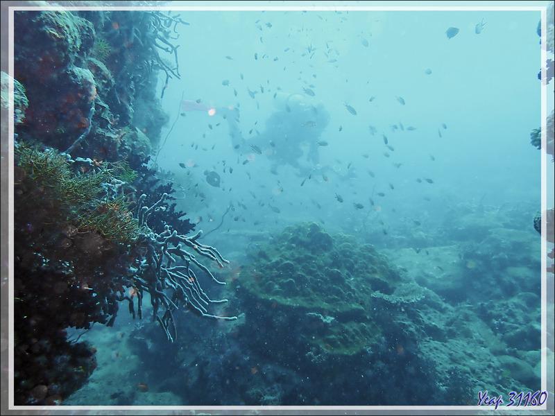 "Le fantôme de Margherita ma monitrice dans la ""brume aquatique"" -  Spot Antsoha (Rocher 4ème Frère) - Tsarabanjina - Mitsio - Madagascar"