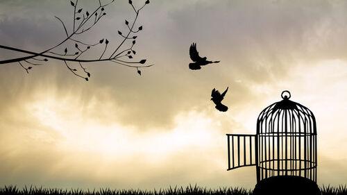Liberté tempérance