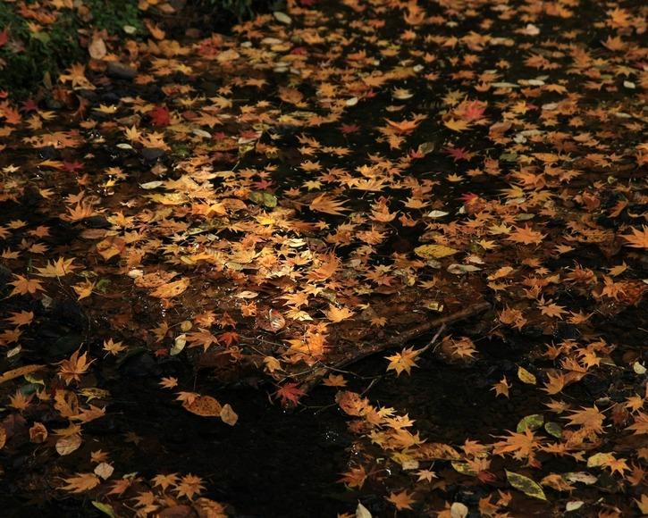 10 Images d'automne - 2