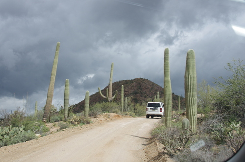 Jour 12 - Saguaro National Park, Arizona