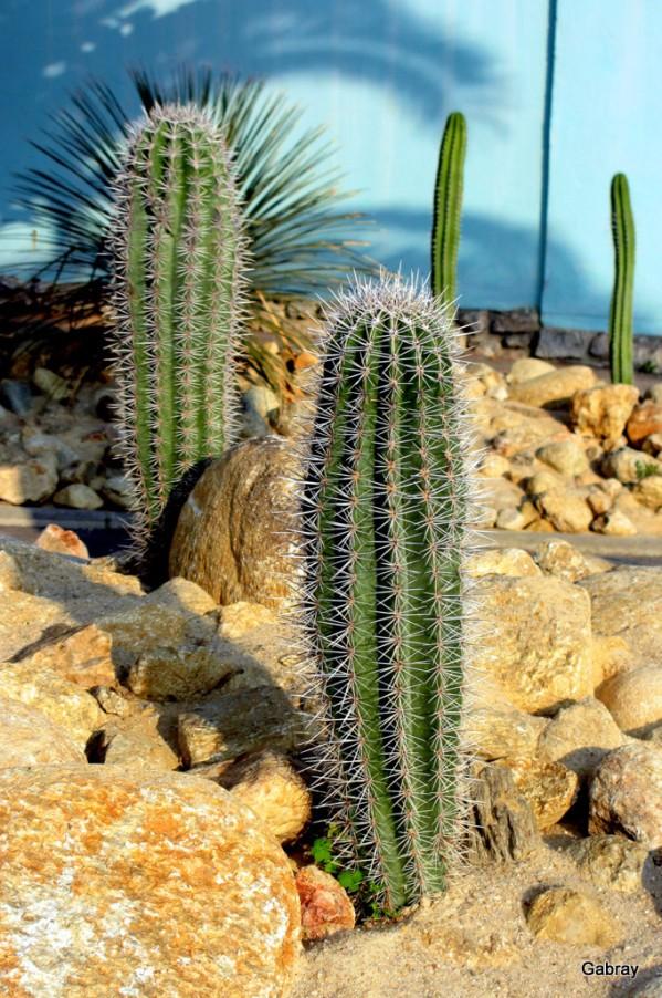 x01---Cactus.JPG