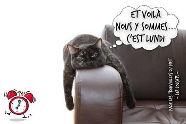 """Résultat de recherche d'images pour """"lundi humour noir"""""""