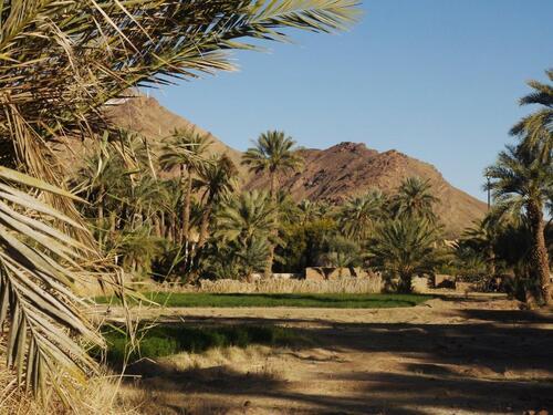 La palmeraie et le djebel Zagora en toile de fond
