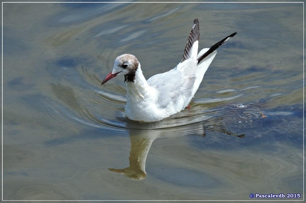 Réserve ornitho du Teich - fin Juilet 2015 - 1/9