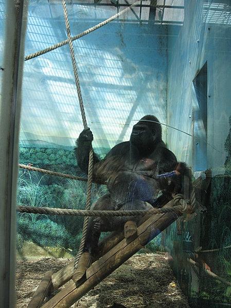 robe;Zoo de Beauval 27 juillet 2009 211