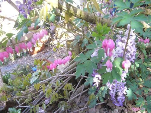 Le jardin d'avril