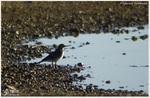 Oiseaux Variés 2 (Photos Laurent)