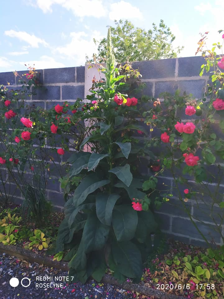 L'image contient peut-être: plante, fleur, arbre, plein air, nature et texte